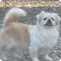 Adopt A Pet :: Sherri - House Springs, MO