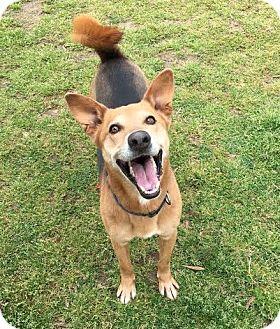 German Shepherd Dog Mix Dog for adoption in Colonial Heights, Virginia - Waka