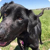 Adopt A Pet :: Tanner - Manhattan, KS