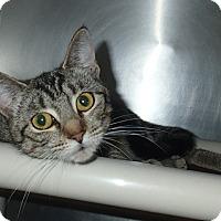 Adopt A Pet :: Luna - Newport, NC