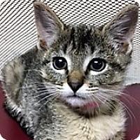 Adopt A Pet :: Loretta - Medina, OH