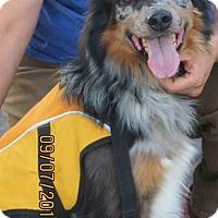 Adopt A Pet :: TWISTER - Nampa, ID