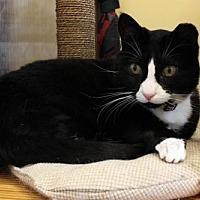 Adopt A Pet :: Sassy - Whitewater, WI