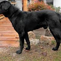 Adopt A Pet :: Blazer - Tyler, TX