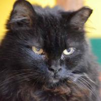Adopt A Pet :: Cleo - Metairie, LA