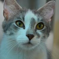 Adopt A Pet :: Tulip - Elkhorn, WI