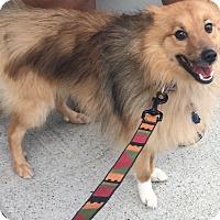 Adopt A Pet :: Max - Oak Ridge, NJ