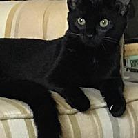 Adopt A Pet :: Paris - San Jose, CA