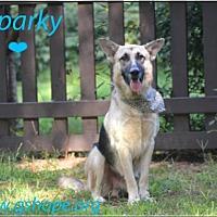 Adopt A Pet :: Sparky - Clemmons, NC