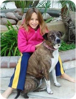 Australian Cattle Dog Mix Dog for adoption in El Cajon, California - princess piggy