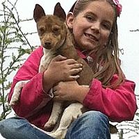 Adopt A Pet :: Diablo - Seattle, WA
