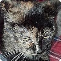 Adopt A Pet :: Cassie - Sterling Hgts, MI