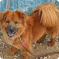 Adopt A Pet :: Angel - dewey, AZ