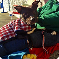 Adopt A Pet :: Wally - Trenton, NJ