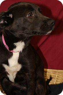 Labrador Retriever Mix Dog for adoption in Waldorf, Maryland - Emily