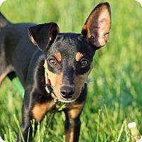 Adopt A Pet :: Mickey - Nashville, TN