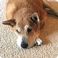 Adopt A Pet :: Zoe - Albemarle, NC
