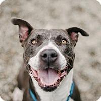 Adopt A Pet :: Faith - Los Angeles, CA