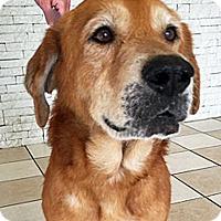 Adopt A Pet :: Hank - BIRMINGHAM, AL