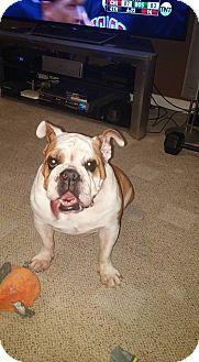 Bulldog Mix Dog for adoption in Odessa, Florida - Kayla