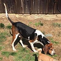 Adopt A Pet :: Ruger - Grayson, KY