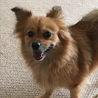 Adopt A Pet :: Ruby - Ball Ground, GA