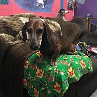 Adopt A Pet :: Goober - York, SC