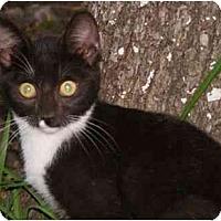 Adopt A Pet :: Shaylee - Owasso, OK