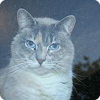 Adopt A Pet :: Eva - Santa Rosa, CA