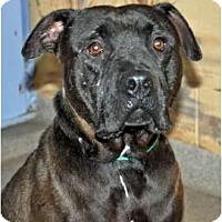 Adopt A Pet :: Jiggs - Port Washington, NY