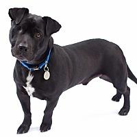 Adopt A Pet :: Teddy - Santa Barbara, CA