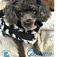 Adopt A Pet :: Gemma - Essex Junction, VT
