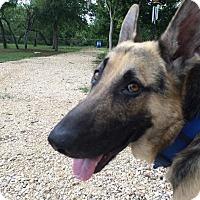 Adopt A Pet :: FERGUS - SAN ANTONIO, TX