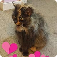 Adopt A Pet :: Pebbles - Fayette City, PA
