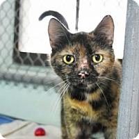 Adopt A Pet :: Choo Choo - Clearwater, FL