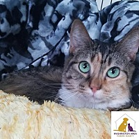 Adopt A Pet :: Lacey - Eighty Four, PA