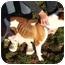 Photo 1 - Rottweiler Mix Dog for adoption in Millerton, Pennsylvania - Ginger