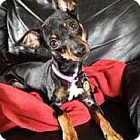 Adopt A Pet :: Faith - Nashville, TN