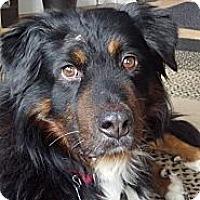 Adopt A Pet :: bandit - Westtown, PA