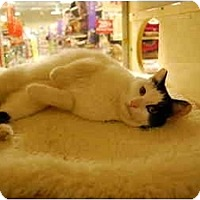 Adopt A Pet :: Tweety - Modesto, CA