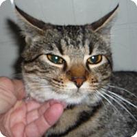 Adopt A Pet :: Moose - Dallas, TX