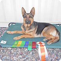 German Shepherd Dog Dog for adoption in Phoenix, Arizona - SERVICE / COMPANION DOG