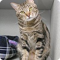 Adopt A Pet :: Zeus - Stamford, CT