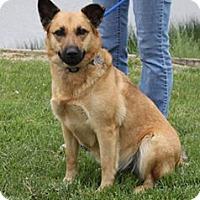 German Shepherd Dog/Shepherd (Unknown Type) Mix Dog for adoption in Staunton, Virginia - Georgia