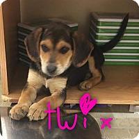 Adopt A Pet :: Twix - Garden City, MI