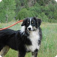 Adopt A Pet :: Kelly - Ridgway, CO