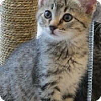 Adopt A Pet :: Spruce - Colorado Springs, CO