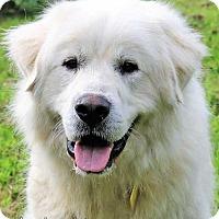 Adopt A Pet :: Ainsley - new! - Beacon, NY