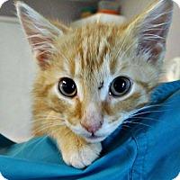 Adopt A Pet :: Milo - New Richmond,, WI