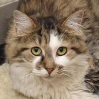 Adopt A Pet :: Zazzle - Elk Grove Village, IL
